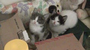 2 kittens found in a warehouse