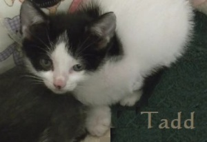 Tadd-name